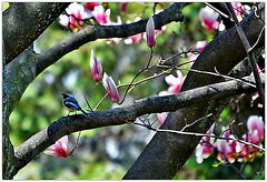 Spring bough