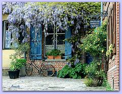 La glycine et la vieille fenêtre