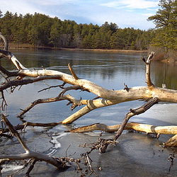2012.01: MA: Myles Standish Forest