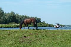 Horse on a dyke