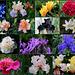 A- Montage fleurs- Jardin 2013