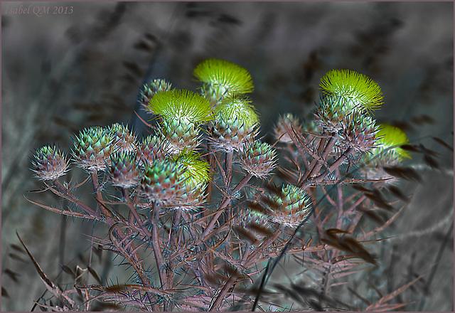 Poesia da terra sedenta, Cynara flavescensNEG