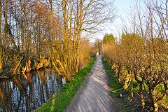 Path near the Houtmankade in Haarlem