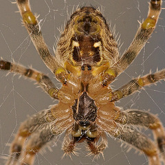 Another Spider