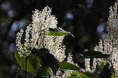 Wunderschöne Blüten (Tierpark Schwaigern)
