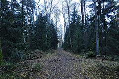 Externsteine – Alone in the forest