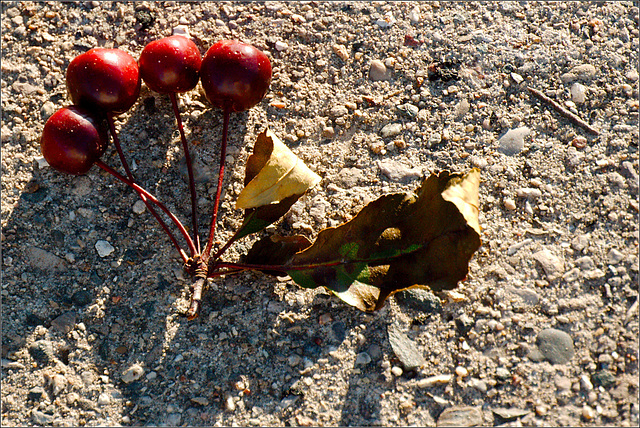 Cherries on Sidewalk