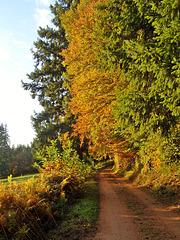 Photo d'archive pour saluer l'automne: le chemin qui mène chez moi [ON EXPLORE]