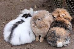 Kaninchen (Leintalzoo Schwaigern)