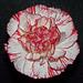 My candycane flower