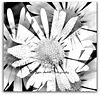 Black & white in the frame