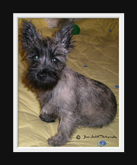 Harry the Cairn