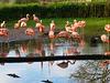 Miroir aux alouettes :-)) Larks mirror