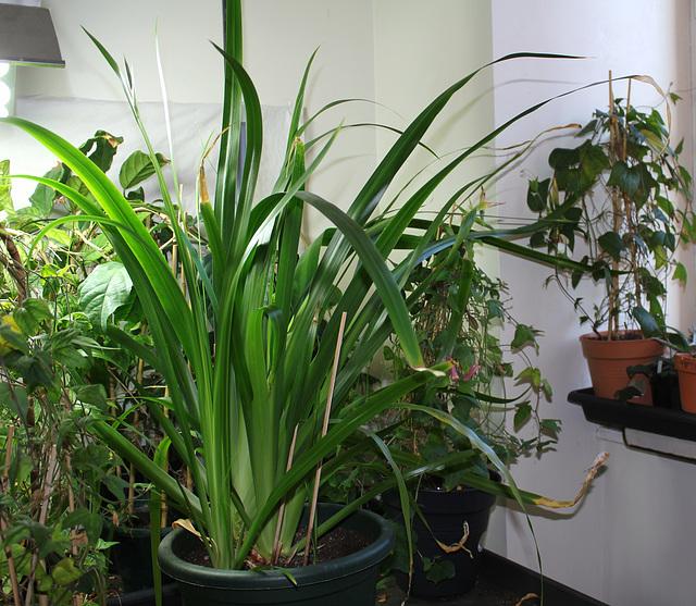 Plante début 2014