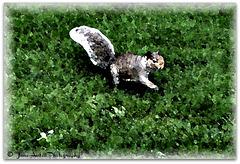 Painted squirrel