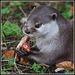 Otter eating lunch