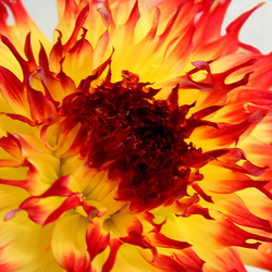 Floral Flame
