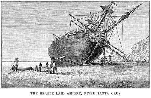Beagle Laid Ashore (2)