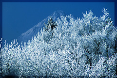 Ein magischer Berg im Hintergrund oder nur Frost im Allgäu?  ©UdoSm