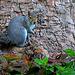 Albert the Squirrel