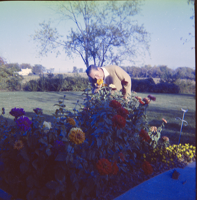 Dad takes time to smell the zinnias?