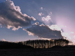 Wolke überm Winterwäldchen