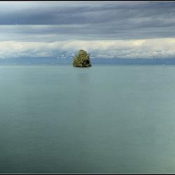 Un arbre sur le lac (Léman)