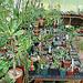 Greenhouse plants 2
