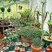 Greenhouse plants 1