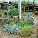 Greenhouse in ground plants 1