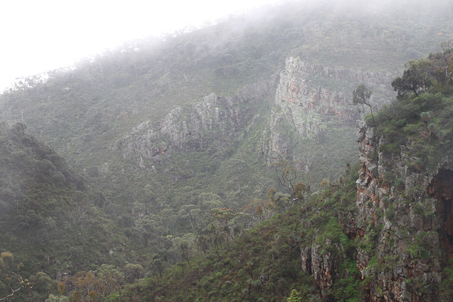 Morialta in the mist