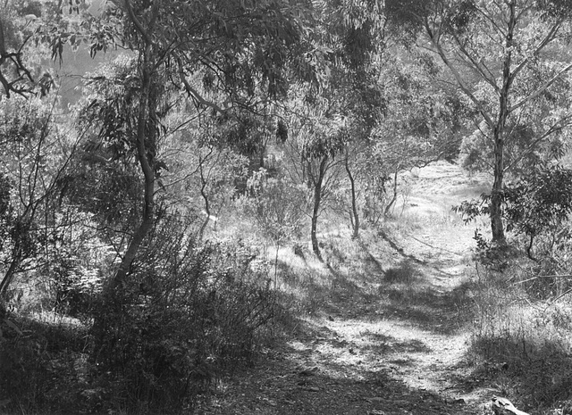 Sunlight and shadow, Gandy Gully