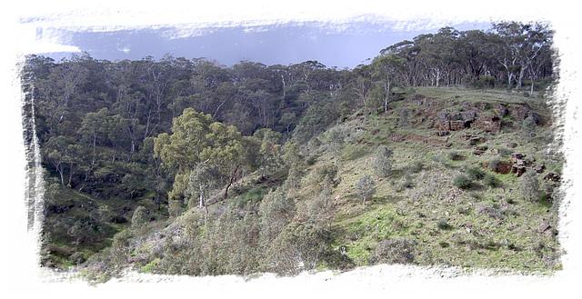 Waite Conservation Reserve