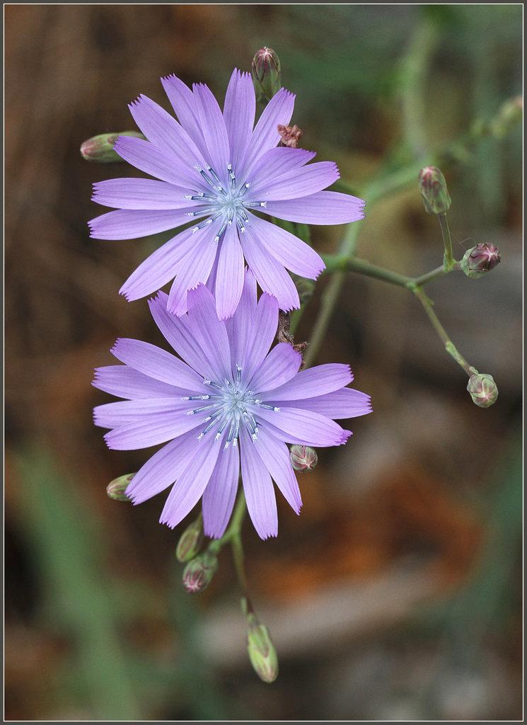 Une fleur par jour.... - Page 3 20510589.1aff766a.1024