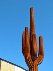Steel Blue Saguaro
