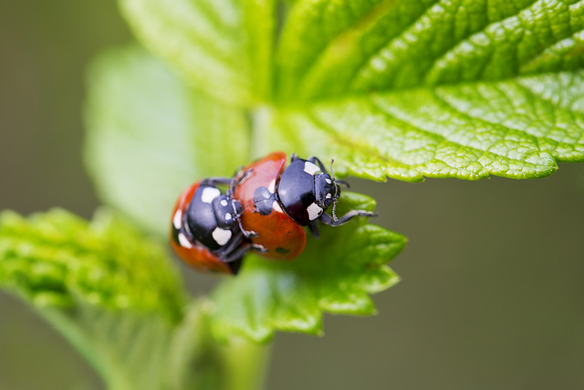 Birds do it...bees do it...ladybirds among the leaves do it.....