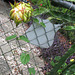 Cereus ..... ahh...