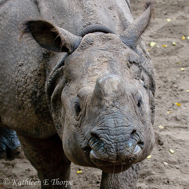 Baby Rhino - Well, My Momma Thinks I'm Pretty Drool and All!