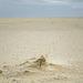 Stranddetail - 20130515