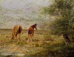 Wild Horses - Lenabem Texture