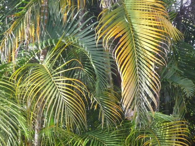 Palmares de Costa Rica