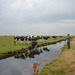 Kühe knipsen - 20130515