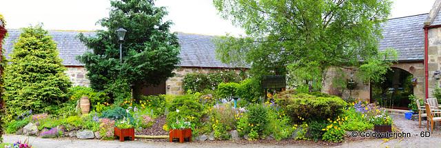 The courtyard Garden in early June