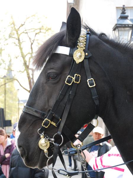 Horse (guard)