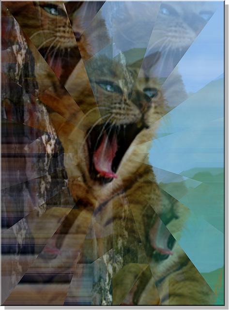 Raminagrobis  effrayé  ou effrayant?