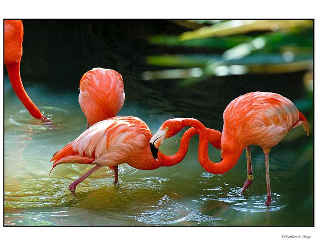 Flamingo Fraternity