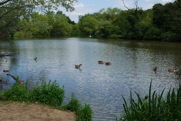 Hainault Country Park Lake