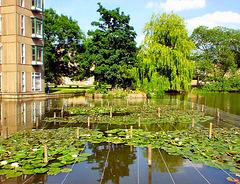 Lily pond.
