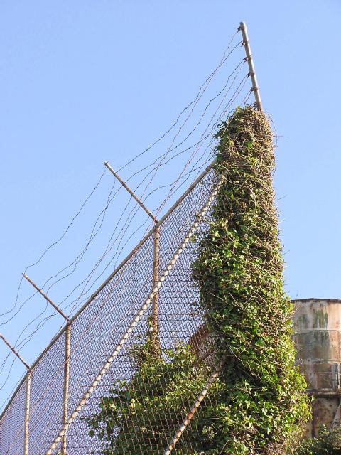 Alcatraz (pc030424)