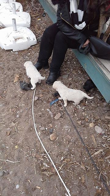 Zilli's pups